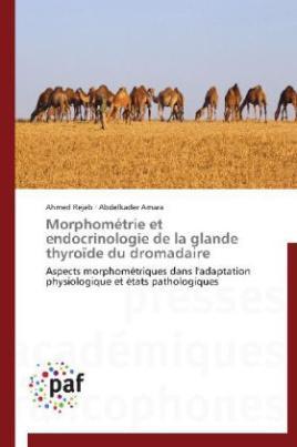 Morphométrie et endocrinologie de la glande thyroïde du dromadaire