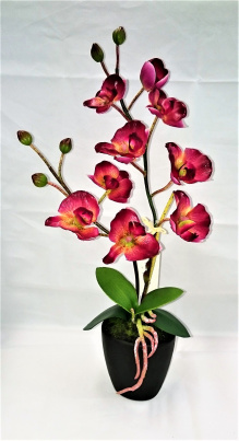 Orchidee mit schwarzem Topf