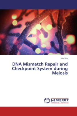 DNA Mismatch Repair and Checkpoint System during Meiosis