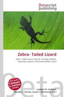 Zebra- Tailed Lizard