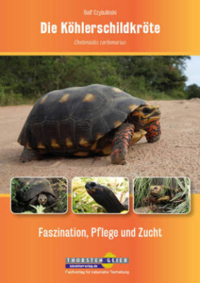 Die Köhlerschildkröte Chelonoidis carbonarius
